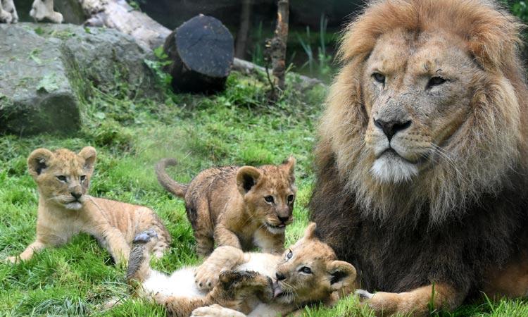 dierentuin-kerkrade